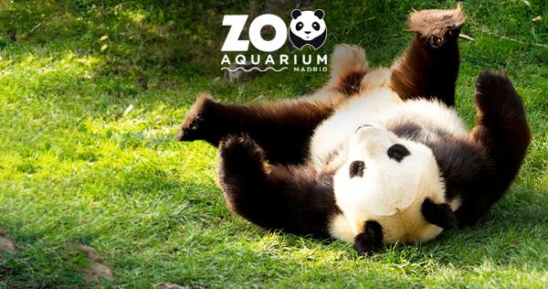 20210614 zoo 600x316