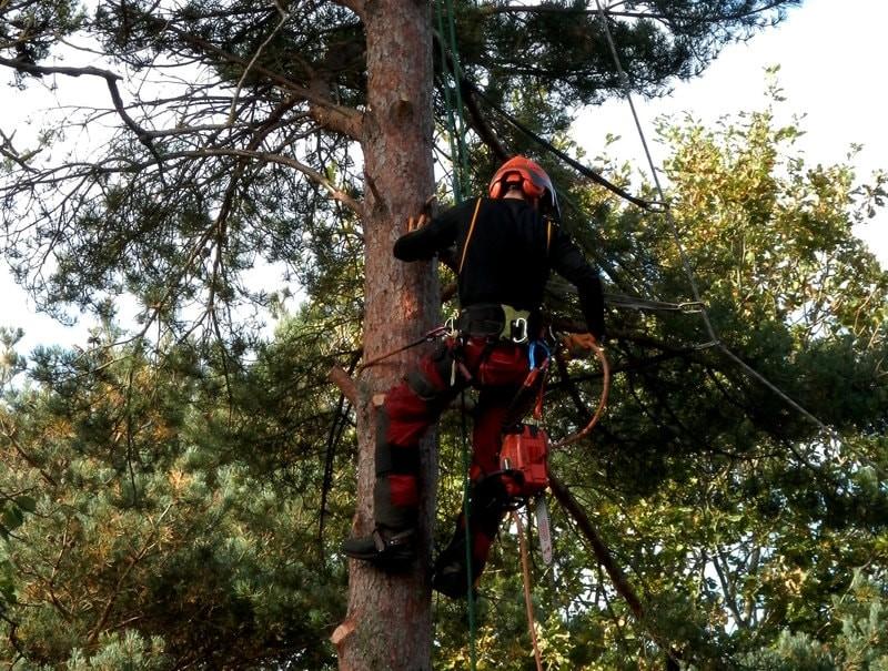 Puun kaatamisen hinta