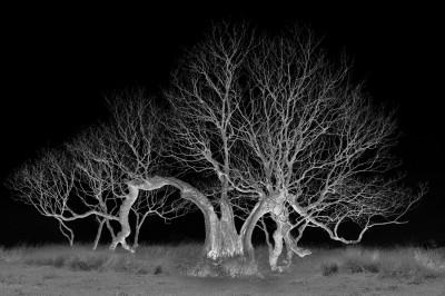 Art Car Boot Fair -  The Tree Edition