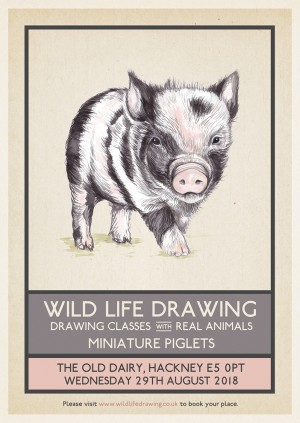 Wild Life Drawing: Miniature Piglets