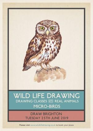 Wild Life Drawing: Micro-birds