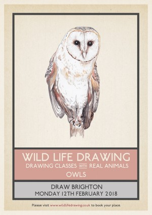 Wild Life Drawing: Owls – Adult Class