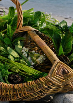 'Come Forage with Me!'  An interactive foray into the world of Pembrokeshire's Wild Food