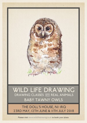 Wild Life Drawing: Baby Tawny Owls #2