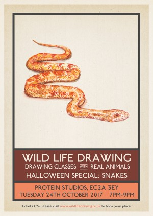 Wild Life Drawing Halloween Special: Snakes