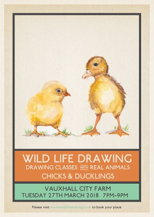 Wild Life Drawing: Chicks & Ducklings