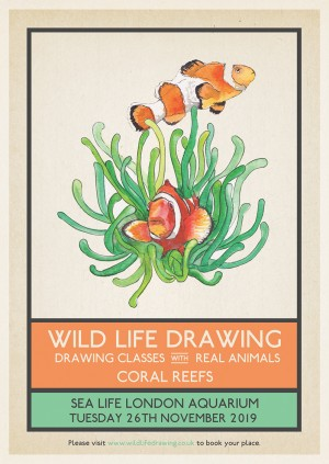 Wild Life Drawing: Coral Reefs