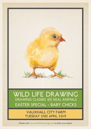 Wild Life Drawing: Baby Chicks