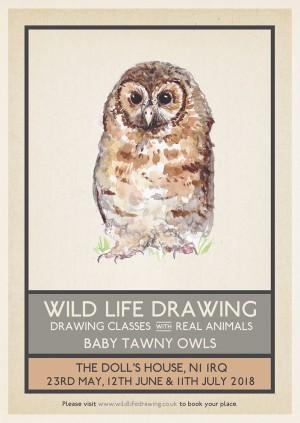 Wild Life Drawing: Baby Tawny Owls #1