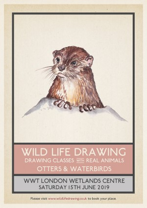 Wild Life Drawing: Otters & Waterbirds
