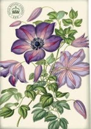 Plant Drawings at the Royal Botanic Gardens, Kew