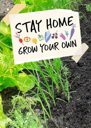 Stay Home Grow your Own