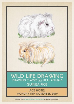 Wild Life Drawing: Guinea Pigs