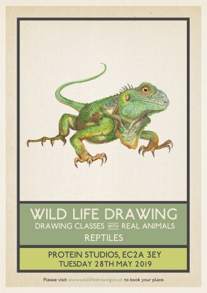 Wild Life Drawing: Reptiles