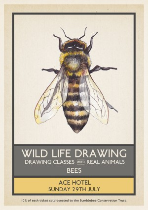 Wild Life Drawing: Bees