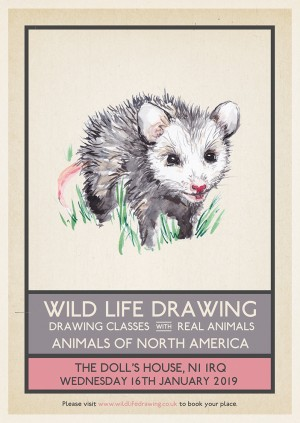 Wild Life Drawing: Animals of North America