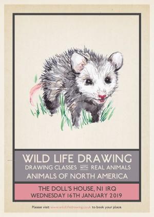 Wild Life Drawing: Animals of North America