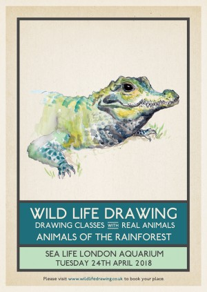 Wild Life Drawing: Animals of the Rainforest