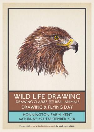 Drawing & Flying: Birds of Prey