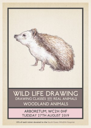 Wild Life Drawing: Woodland Animals