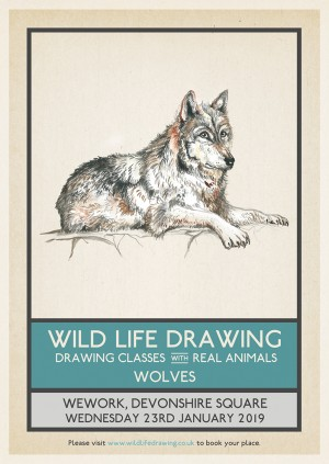 Wild Life Drawing x LOTI: Wolves