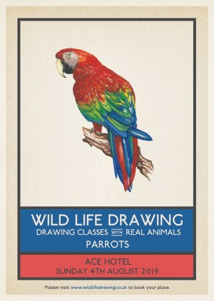 Wild Life Drawing: Parrots