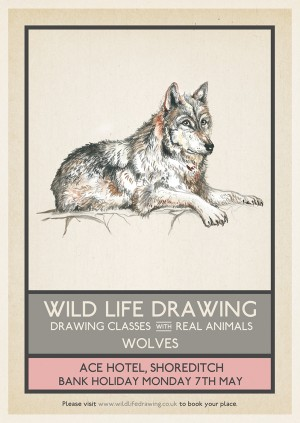 Wild Life Drawing: Wolves