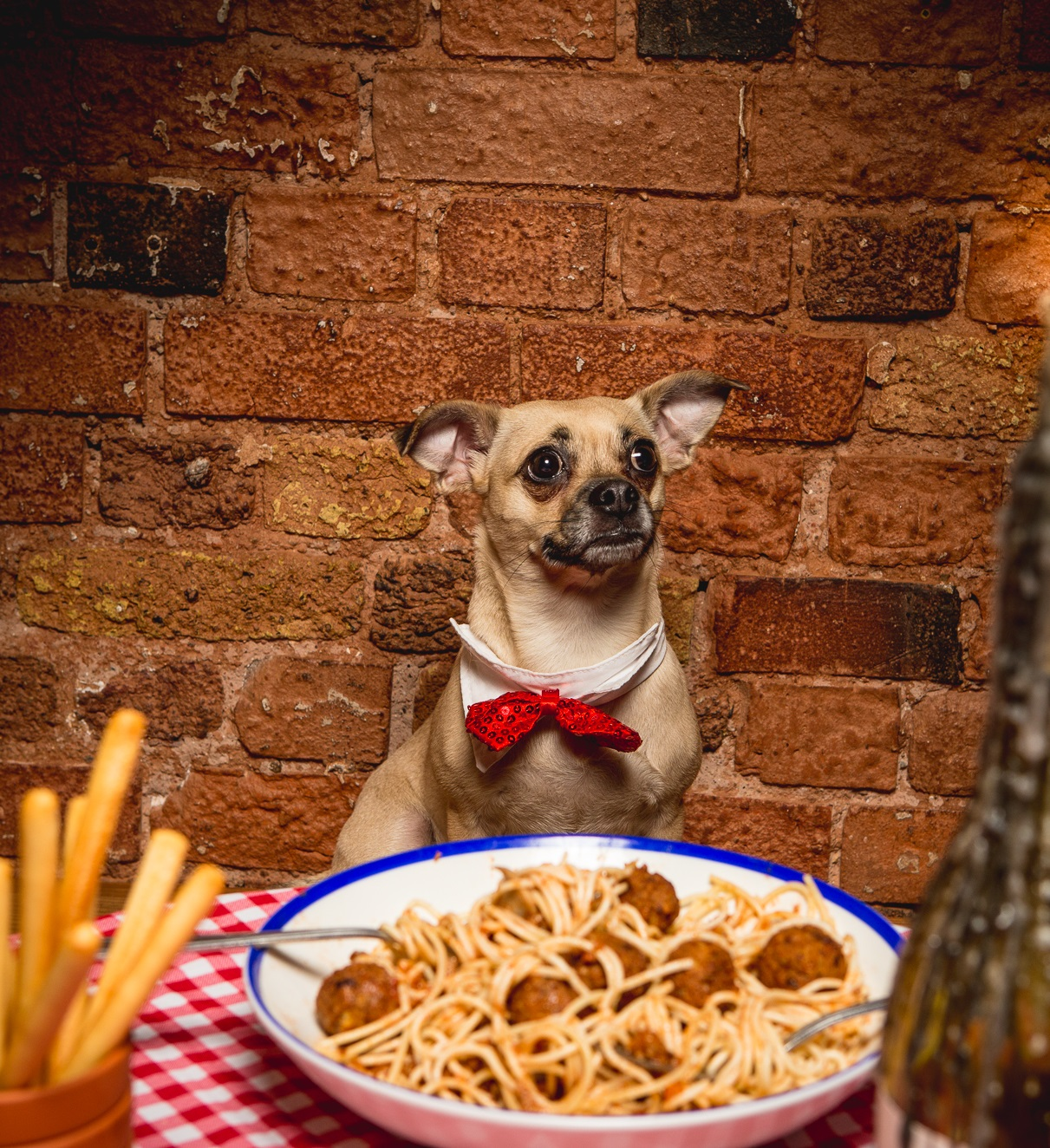 Lady and the Tramp Valentine's Screening - Dog Friendly!