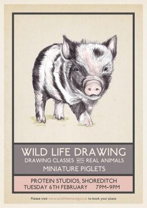 Wild Life Drawing: Miniature Piglets