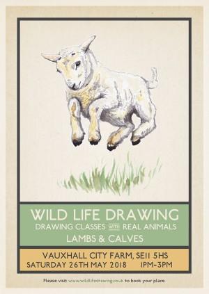 Wild Life Drawing: Lambs & Calves