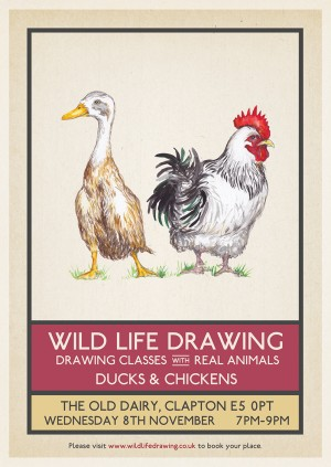 Wild Life Drawing: Ducks & Chickens