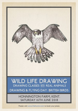 Drawing & Flying: British Birds