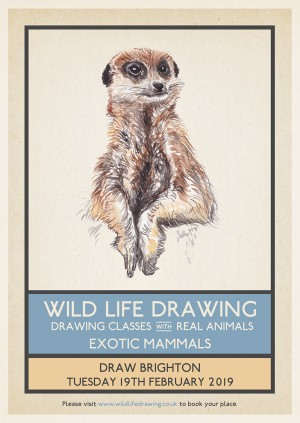 Wild Life Drawing: Exotic Mammals