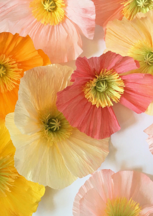 Paper Poppy Workshop