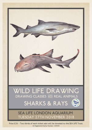 Wild Life Drawing: Sharks & Rays
