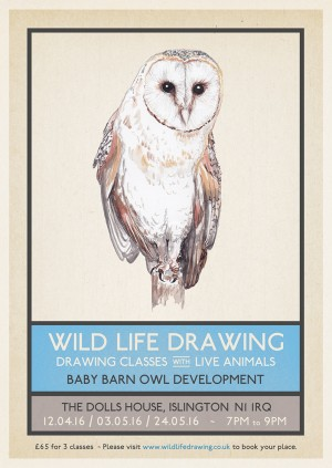 Wild Life Drawing: Baby Barn Owls