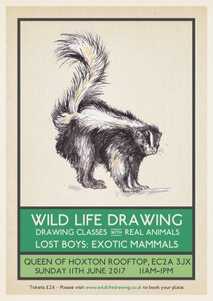 Wild Life Drawing: Exotic Mammals