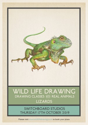 Wild Life Drawing: Lizards