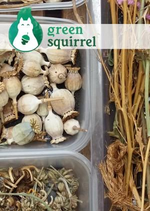 Seed saving / Arbed Hadau