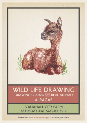 Wild Life Drawing: Alpacas