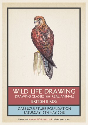 WildLife Drawing: British Birds
