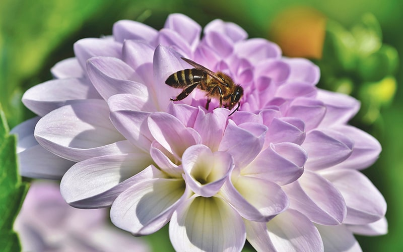 save the bees this national honey bee day with organic honey