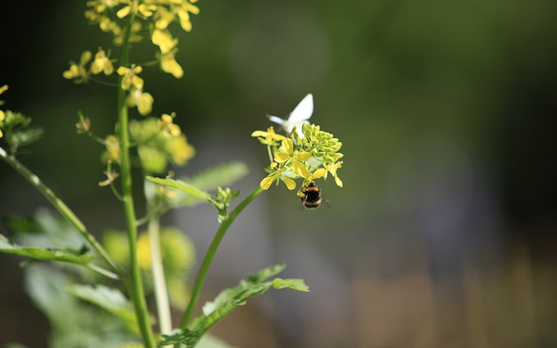 national honey bee day 2021 to save the honey bees