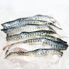 Wild Mackerel | Wild Fish