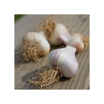 Dried Garlic 3 Bulbs