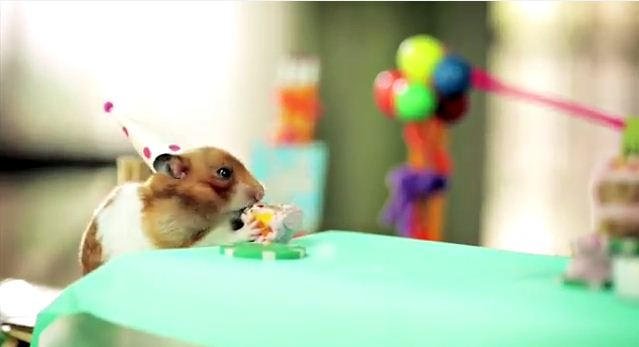 Tiny Hamster Is Back With Tiny Birthday Cake - Hamster birthday cake