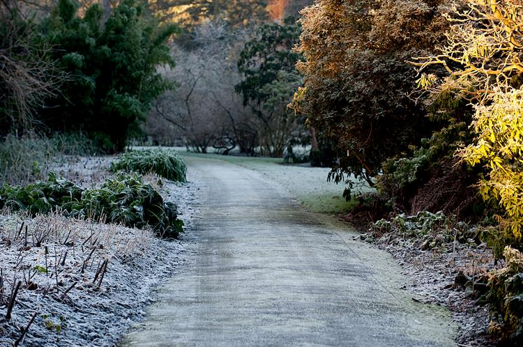 Evoke-Frost Weather Pictures90284770 (1)
