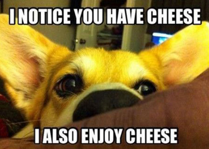 addicted to cheese