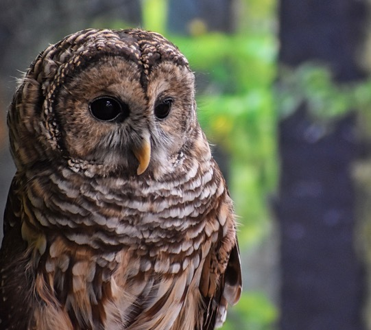 Tune into a virtual production featuring native owls, hawks and falcons in the habitats they depend on for their survival. The event will be available for streaming October 18 - November 30!