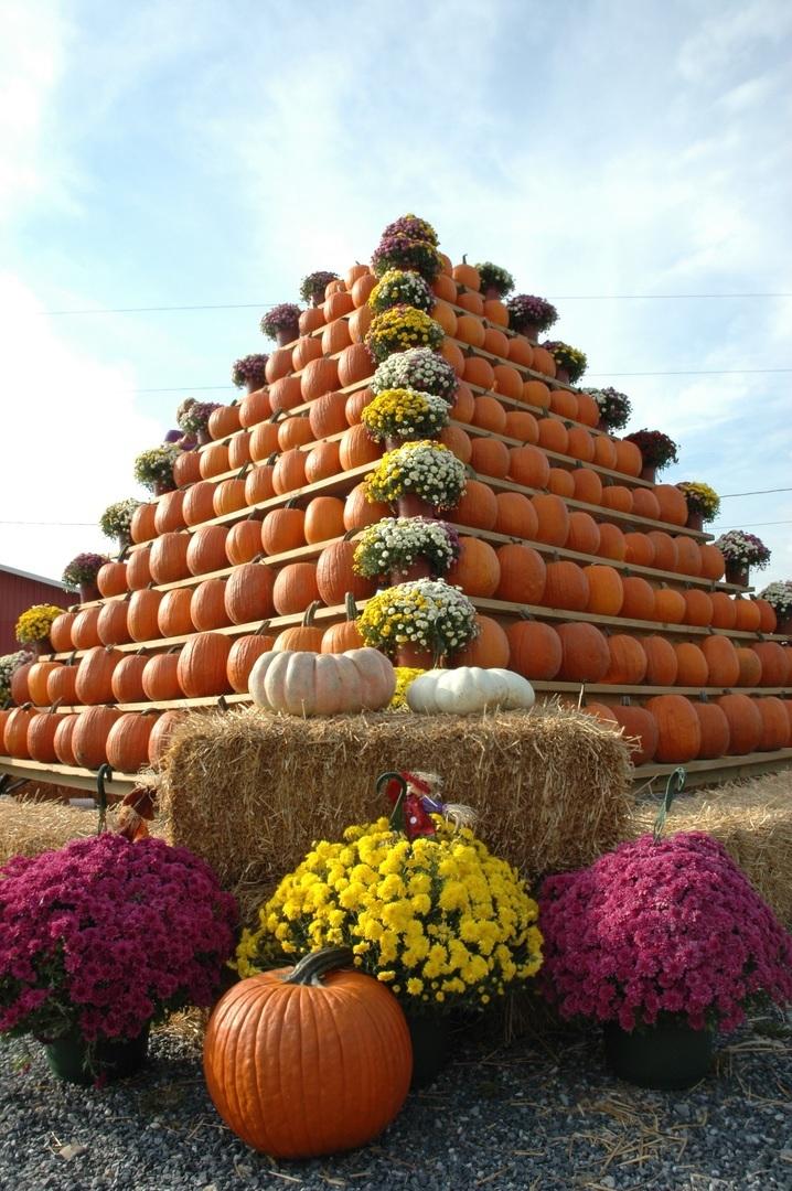 South Jersey Pumpkin Show - South Jersey Pumpkin Show